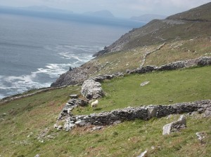 Sheep! Crashing waves and distant islands.